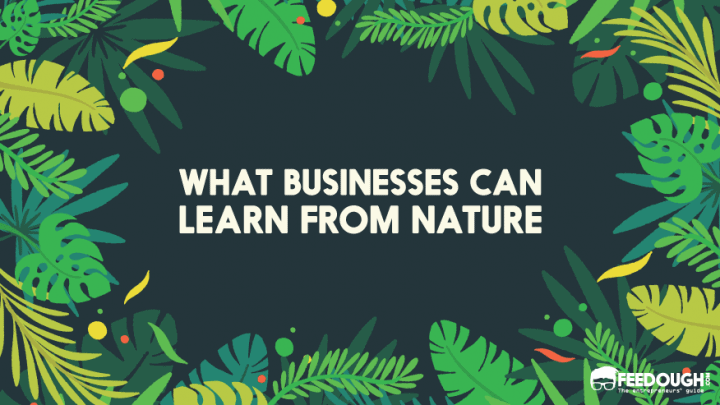 what businesses can Learn from Nature