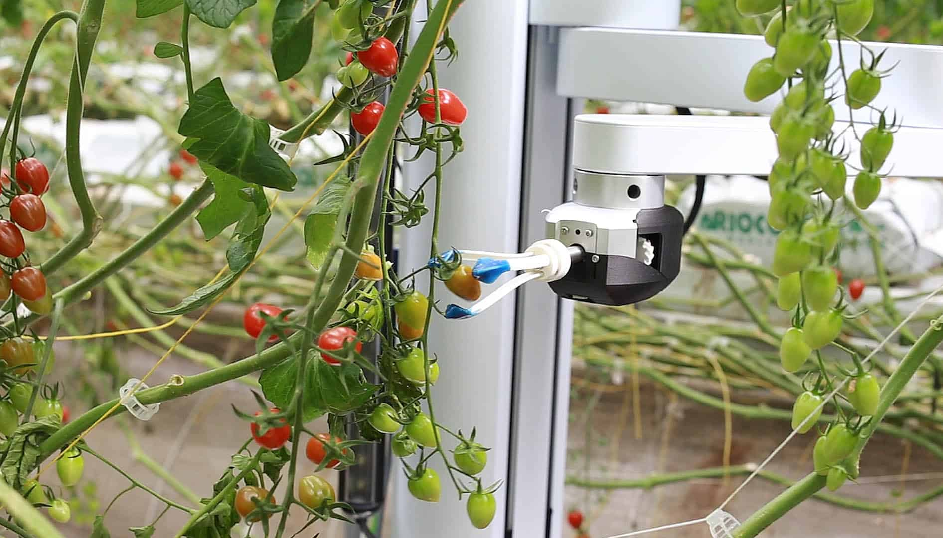 rootai plant robotics